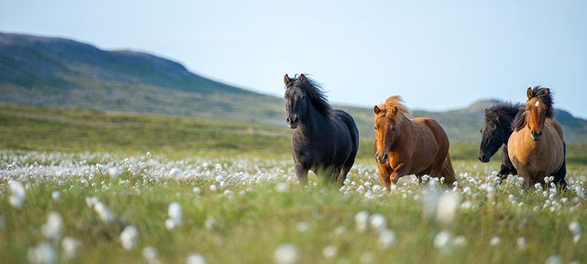 Ekholms PROB – allt du behöver för din häst